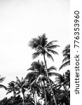 Palm Tree Leaf Background Whit...