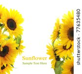 Sunflower Frame . On white background - stock photo
