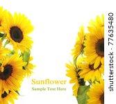 Sunflower Frame . On White...
