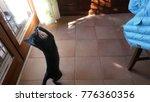 gray kitten jumping playing... | Shutterstock . vector #776360356