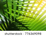 light and shadow of tropical... | Shutterstock . vector #776369098