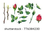 set of leaves  buds  stems of... | Shutterstock . vector #776384230