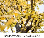 close up yellow leaf on tree in ... | Shutterstock . vector #776389570