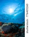 black sea sponge with blue... | Shutterstock . vector #776405260
