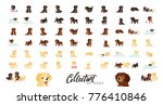 set of cute dogs labrador and... | Shutterstock . vector #776410846