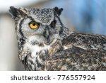 great horned owl   Shutterstock . vector #776557924