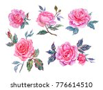 pink roses  watercolor painting ... | Shutterstock . vector #776614510