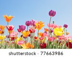 Beautiful Colored Flowers With...