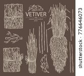 collection of vetiver  root and ... | Shutterstock .eps vector #776646073