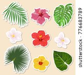 vector different tropical... | Shutterstock .eps vector #776683789