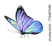 beautiful blue butterfly... | Shutterstock . vector #776687680
