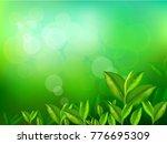 nature leaves green tea on...   Shutterstock .eps vector #776695309