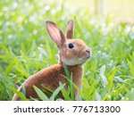 Brown Rabbit In Green Meadow