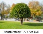autumn trees   nature | Shutterstock . vector #776725168