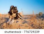 Stray Dog In Desert  Iran