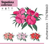 exotic plant impatiens isolated ... | Shutterstock .eps vector #776788663