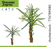 exotic plant dracaena isolated... | Shutterstock .eps vector #776789080