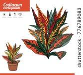 exotic plant codiaeum isolated... | Shutterstock .eps vector #776789083