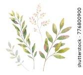 hand drawn watercolor set green ... | Shutterstock . vector #776800900