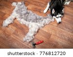 Small photo of Dog lies next to the silhouette of a dog from combed wool. Moulting and big pile fur siberian husky. Dog lying next to its combed-out seasonal undercoat. Slicker brush.