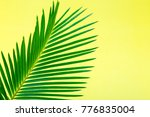 Tropical Background Palm Trees...