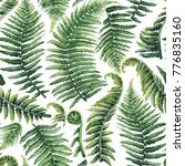 watercolor collection of fern... | Shutterstock . vector #776835160