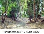 picturesque remote road in... | Shutterstock . vector #776856829