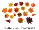 autumn maple leaves | Shutterstock . vector #776857663