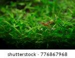 shrimp and fishes in aquarium... | Shutterstock . vector #776867968