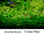 shrimp and fishes in aquarium... | Shutterstock . vector #776867980