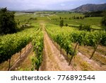 vineyards producing chilean... | Shutterstock . vector #776892544