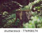 north scandinavian pine forest  ... | Shutterstock . vector #776908174