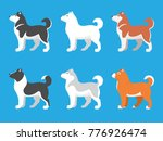 husky dogs of different colors. ... | Shutterstock .eps vector #776926474