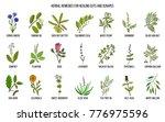 herbal remedies for healing... | Shutterstock .eps vector #776975596