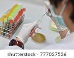 streak and stab bacteria in...   Shutterstock . vector #777027526