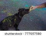 fluffy little black dog covered ...   Shutterstock . vector #777057580