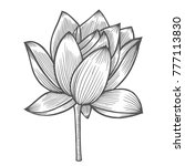 water lily flower illustration  ... | Shutterstock .eps vector #777113830