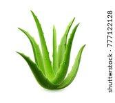 realistic aloe vera vector... | Shutterstock .eps vector #777122128