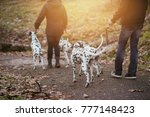 Stock photo dog walkers with dalmatian dogs enjoying in park 777148423