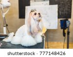 shih tzu at grooming salon.  | Shutterstock . vector #777148426
