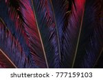 tropical leaves of palm tree in ... | Shutterstock . vector #777159103