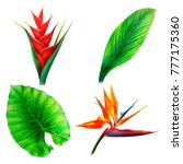 tropical leaves and red flowers ... | Shutterstock . vector #777175360
