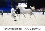 arabian horse world... | Shutterstock . vector #777210940