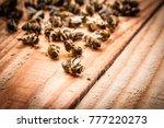 dead bees on wooden boards | Shutterstock . vector #777220273