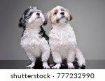 studio shot of two adorable... | Shutterstock . vector #777232990