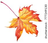 maple leaves in a watercolor... | Shutterstock . vector #777249130