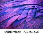 plumage of tropical unusual... | Shutterstock . vector #777258568