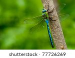 Emperor Dragonfly on a stick - stock photo