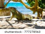 close up of a beautiful green... | Shutterstock . vector #777278563