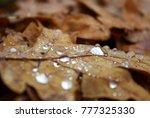 fallen autumn leaves with rain... | Shutterstock . vector #777325330